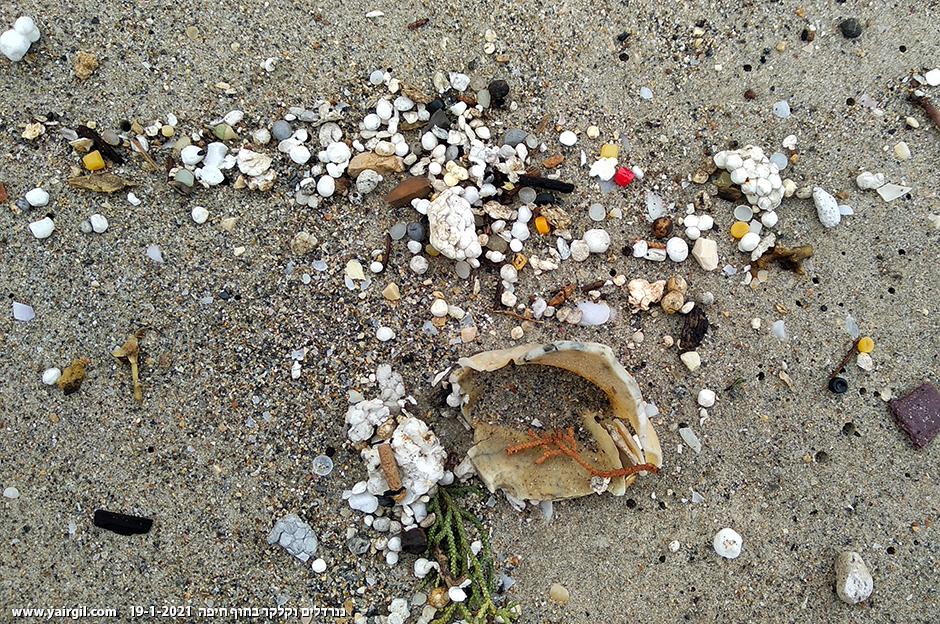 נורדלים וכדוריות קלקר ולכלוכים שונים על חוף הים בחיפה, העשירה במימצאים מסוג זה